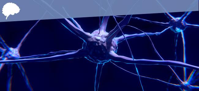 brein: neuronen